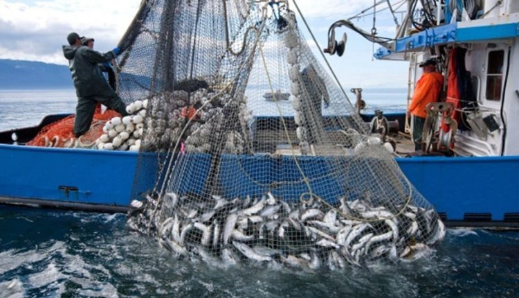 bb81d361-fisheries